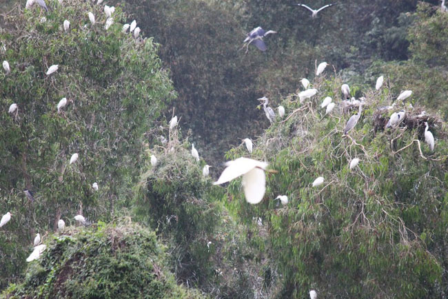 bird watching in Thung nham